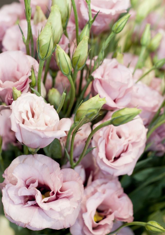 Elisma Rose Floral Designs...0663